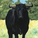 Toro Negro